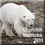 Churchill Manitoba 2011