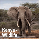 Kenya - Wildlife